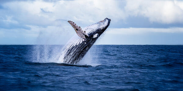 Whale Watching (Photo: Nico Faramaz/Shutterstock)