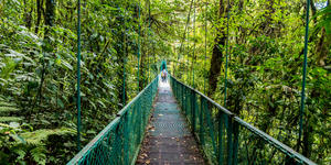 Hanging Bridge in Selvatura Park, Puntarenas, Costa Rica (Photo: Simon Dannhauer/Shutterstock)