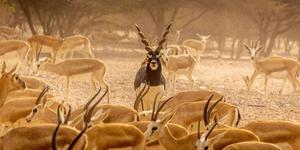 Safari Drive on Sir Bani Yas (Photo: Arjun Sasi/Shutterstock.com)