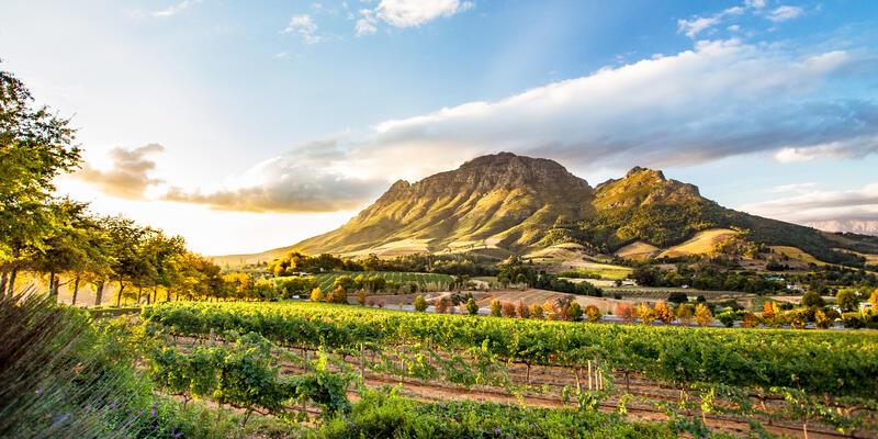 Wine Region Near Stellenbosch Looking at Simonsberg in South Africa (Photo: ModernNomad/Shutterstock)