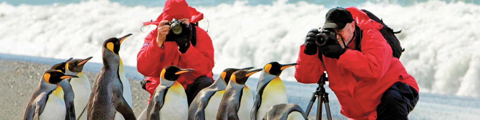 Guests Get Unique Vantage Point for Photographing King Penguins (Photo: Lindbland Expeditions)