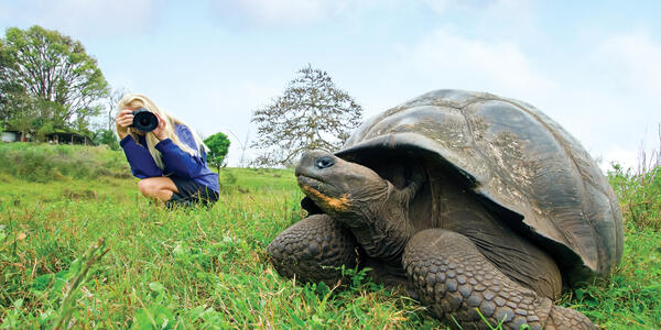 A blonde woman in the background photographing a Wild Galapagos giant tortoise in the foreground