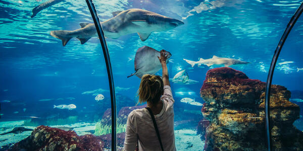 Young woman touching the shark and ray tank at the Barcelona Aquarium