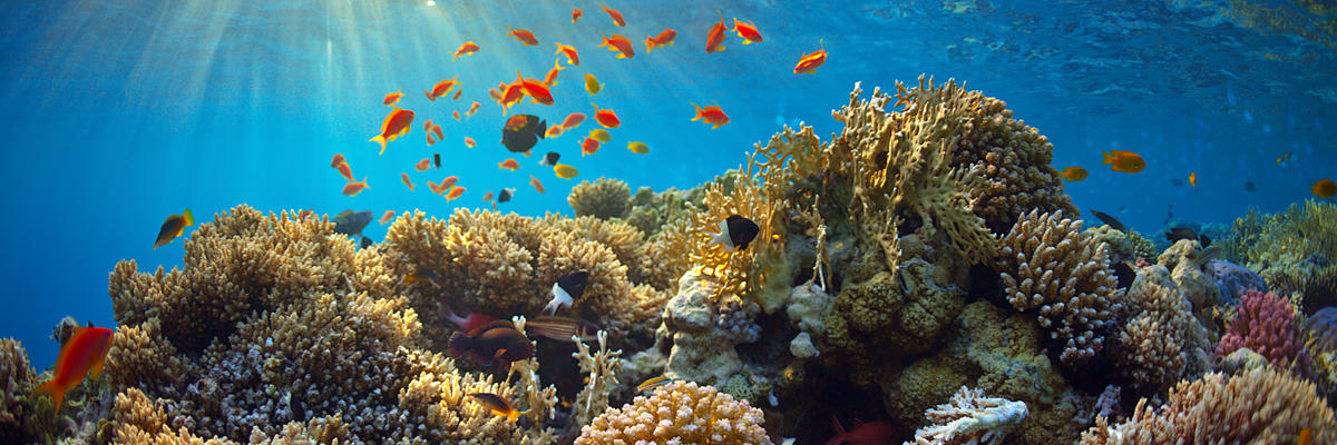 Ashmore Reef (Photo: Borisoff/Shutterstock)