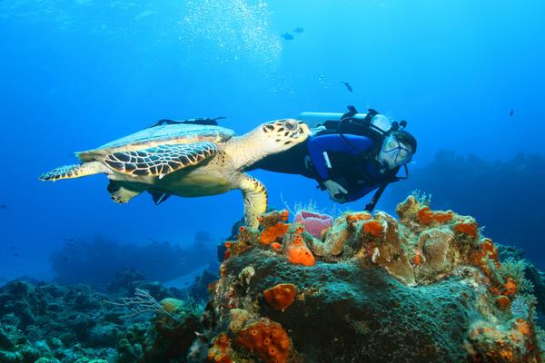 Snorkeling in Cozumel (Photo: Brian Lasenby/Shutterstock)