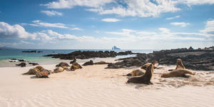 Galapagos (Photo: FOTOGRIN/Shutterstock)