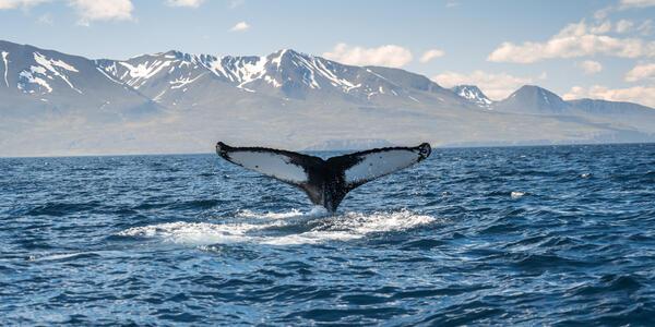 Iceland's Husavik (Photo: Shutterstock)