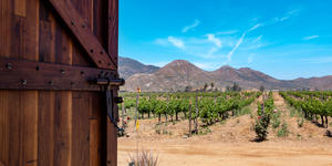 Photograph of a door opening to a view of a vineyard in Ensenada, Baja California, Mexico - Photography by Sherry V Smith via Shutterstock