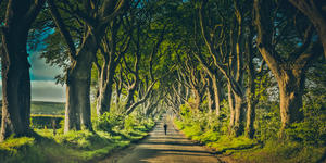 Photograph of the Dark Hedges, near Belfast, Northern Ireland, a famous location from the TV series Game of Thrones. - Photography by Shailpik Biswas via Shutterstock)