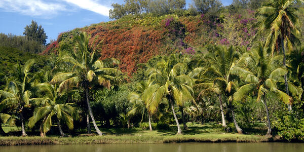 Photograph: Palm trees and river bank are bright in sunshine with blue skies in Allerton Garden, Kauai, Hawaii - Photography by Bonita R. Cheshier via Shutterstock