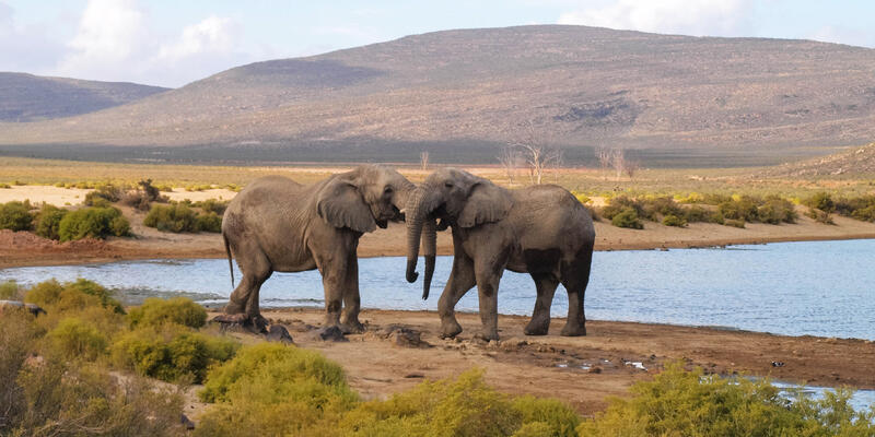 Elephants in The Aquila Private Game Reserve in South Africa (Photo: Amber Walker/Shutterstock)
