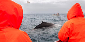 Humpback Whale Watching in Iceland (Photo: Kojin/Shutterstock)