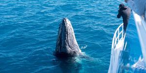 Humpback Whale Watching (Photo: Steve Todd/Shutterstock)