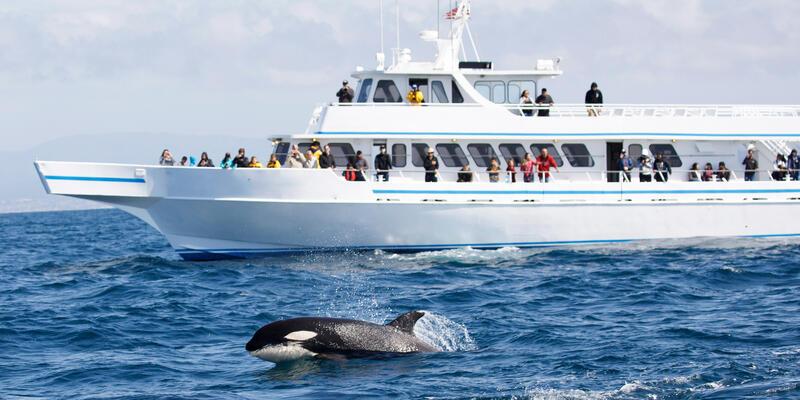 Whale Watchers Watching an Orca (Photo: Tory Kallman/Shutterstock)