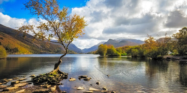 Lone Tree on Llyn Padarn, Snowdonia, Wales, UK (Photo: Lukasz Pajor/Shutterstock)