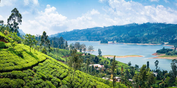 Beautiful View on Tea Plantation Near Nuwara Eliya, Sri Lanka (Photo: kennymax/Shutterstock)