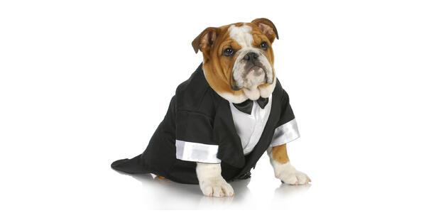 Dog in Tuxedo (Photo: WilleeCole Photography/Shutterstock)
