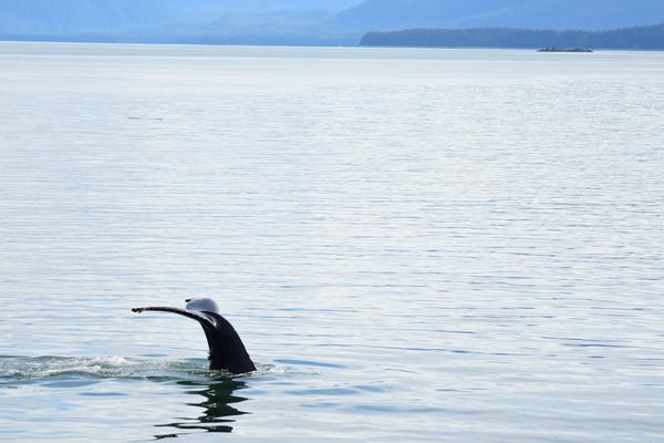 Whale Quest Juneau Whale-Watching Excursion Review (Photo: Christina Janansky/Cruise Critic)