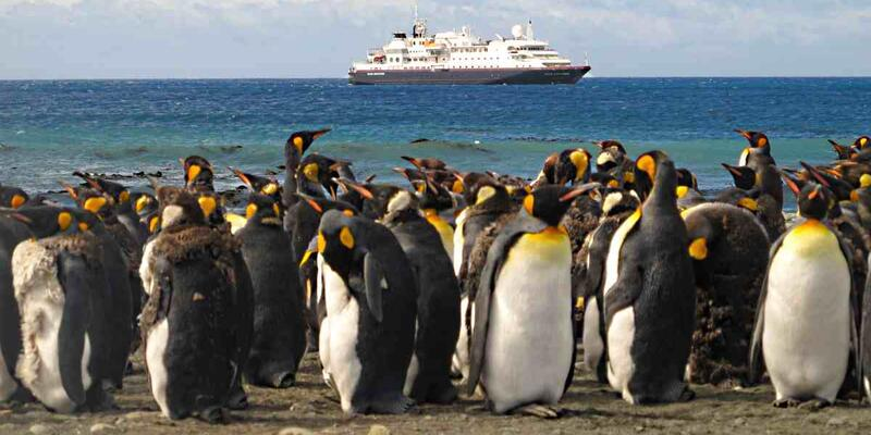 Macquarie Island with Emperor Penguin's with a Vessel in the Distance (Photo: Roderick Eime/Flickr)