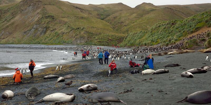 Seals and Penguins Along with Tourists on Macquarie Island (Photo: Noel Carmichael/Tasmania Parks and Wildlife Service/Flickr)