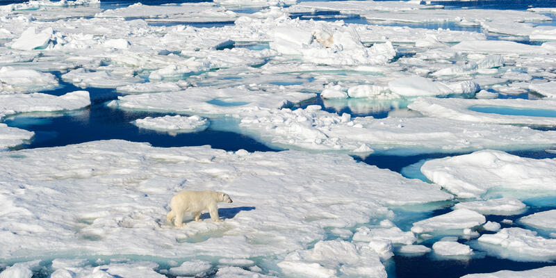A Lone Polar Bear Walking Along Ice in the Arctic Circle (Photo: Don Landwehrle/Shutterstock)