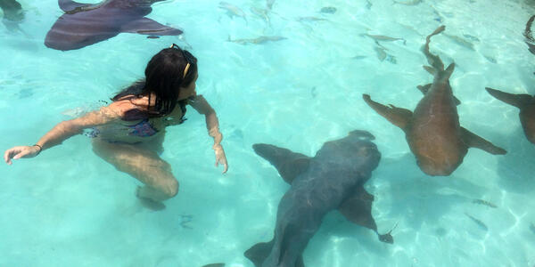 Woman swimming with several nurse sharks in the crystal blue water in Nassau
