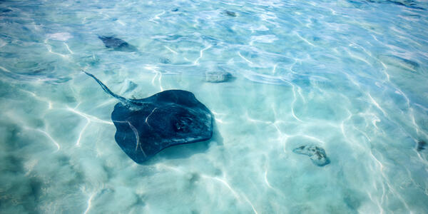Stingray Beach Encounter on Princess Cays (Photo: Princess Cruises)