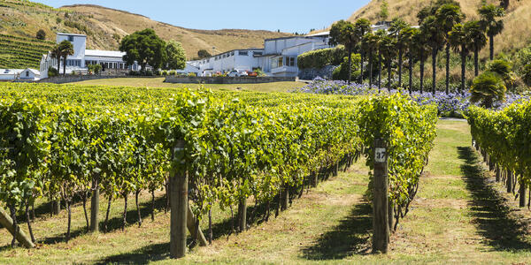 The Oldest and Second Largest Winery, Hawke's Bay, in New Zealand (Photo: JSvideos/Shutterstock)