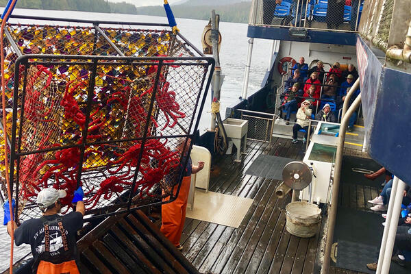 Employees bringing in multiple crabs caught up to deck (Photo: Chris Gray Faust/Cruise Critic)