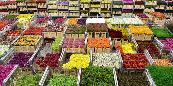 Aalsmeer Flower Auction in Amsterdam (photo via Shutterstock).