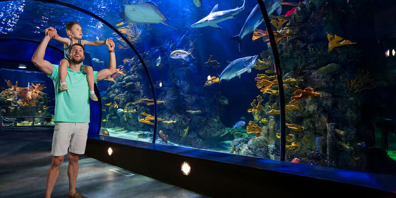 A father and son enjoying a family visit to the Moody Gardens Aquarium in Galveston, Texas, USA (Photo: Galveston Island Convention & Visitors Bureau)