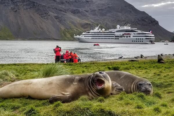 Three tubby seals laying in the grass in Antartica, with cruise ship and cruise passengers in the background