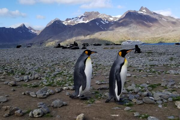 Two penguins walking in Antarctica with cruise ship in the bakground