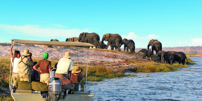 Passengers watching a herd of elephant from a small boat, as part of a Safari excursion with CroisiEurope's African Dream