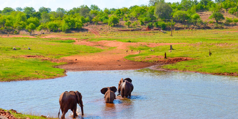 Shot of three elephants crossing a river during a safari excursion with CroisiEurope