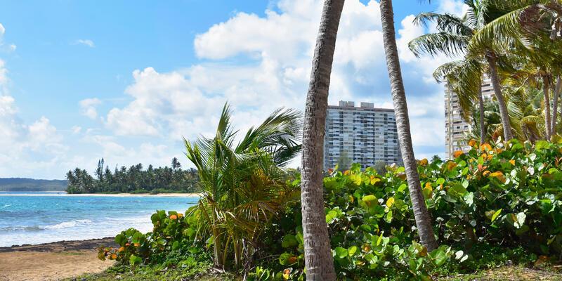 View of the sea through the palm trees on Luquillo beach Puerto Rico. (Photo: Pat Marais/Shutterstock)