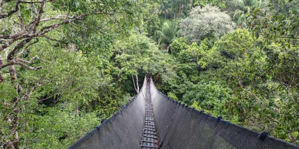 Canopy Walkway in the Amazon Forest (Photo: Christian Vinces/Shutterstock)