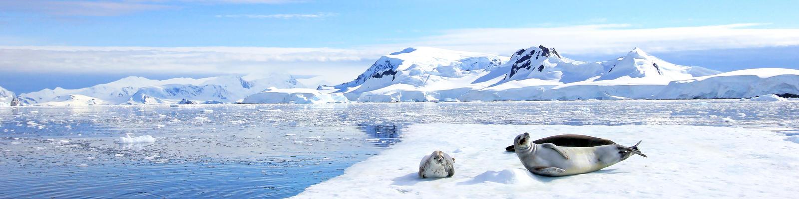 Crabeater Seals on Ice Floe, Antarctic Peninsula, Antarctica (Photo: reisegraf.ch/Shutterstock)