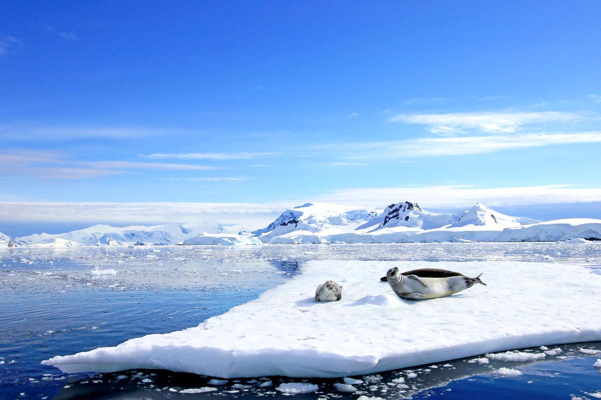 Elephant Island, Antarctica Cruises   Celebrity Cruises