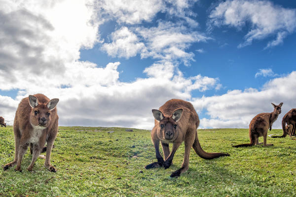 Kangaroo Island, South Australia (Photo: Andrea Izzotti/Shutterstock)