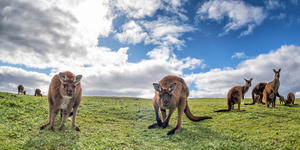 Kangaroo Island, South Australia (Photo: Andrea Izzotti/Shutterstock)