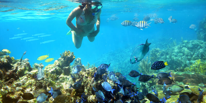 Woman Snorkeling Near the Coral Reef (Photo: soft_light/Shutterstock)