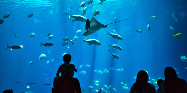 Father & Son Enjoying Aquarium (Photo: fletchjr/Shutterstock)