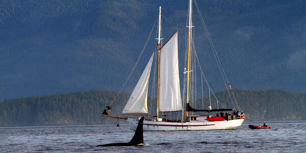 Small Ships in Alaska: A Guide to Cruising Off the Beaten Path