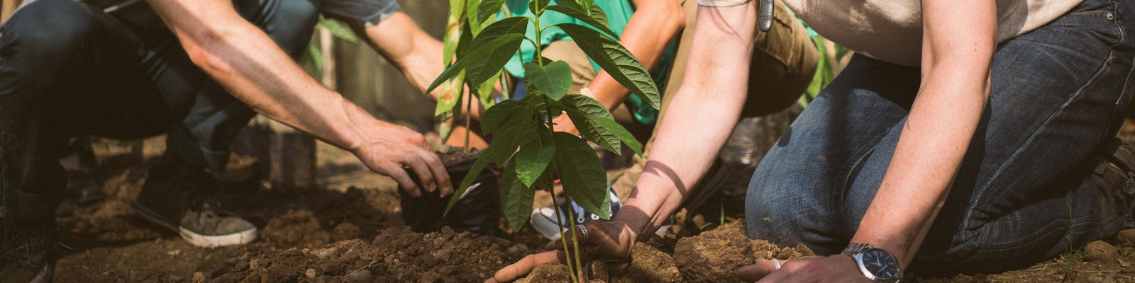 Impact activity at a cacao nursery in the Dominican Republic (Photo: Fathom)