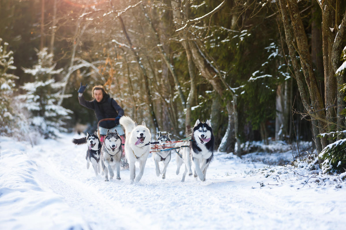 Norway Cruises Husky Sledding Cruise Critic