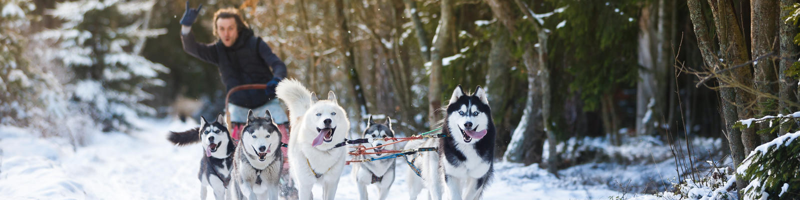 We Try It: Husky Sledding on a Norway Cruise (Photo: Konstantin Tronin/Shutterstock.com)
