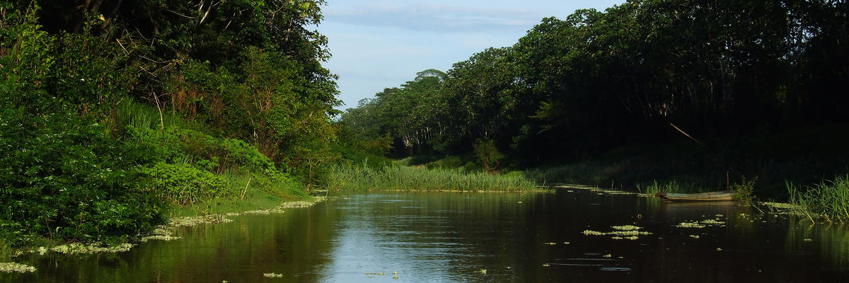 5 Best Amazon River Cruises 2018 With Prices Cruises To